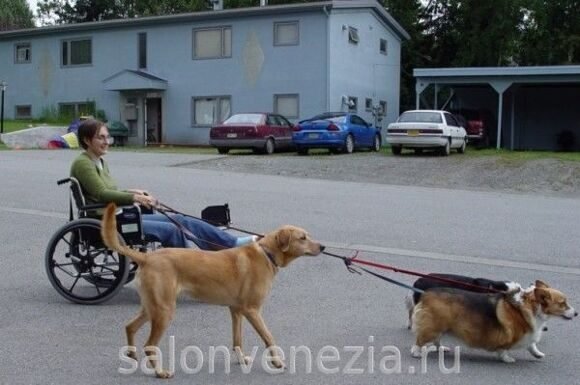 walking-the-dog-in-a-wheelchair-tom-1024x682-600x399